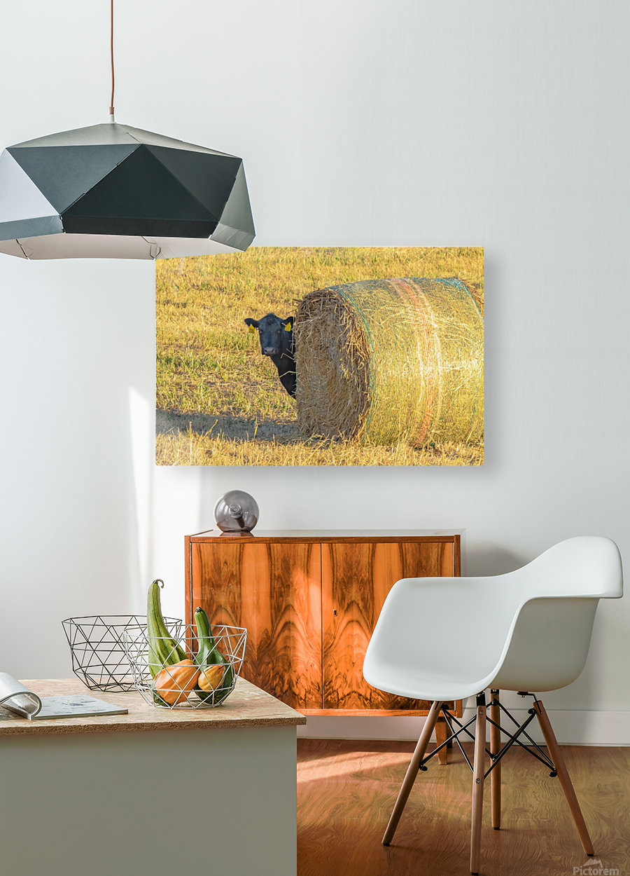 Hay.You Looking For Me  HD Metal print with Floating Frame on Back