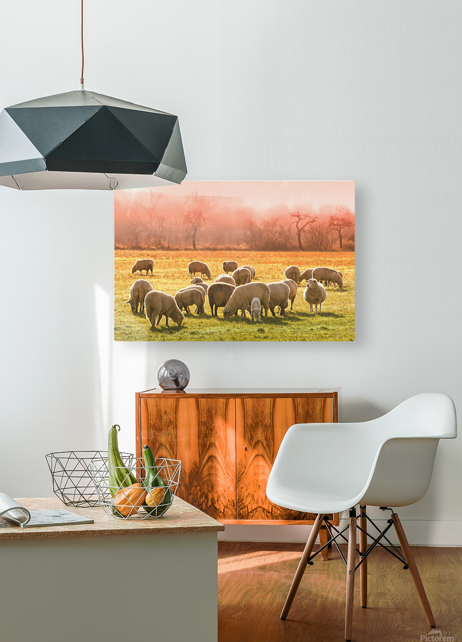 animal sheep flock of sheep meadow  HD Metal print with Floating Frame on Back