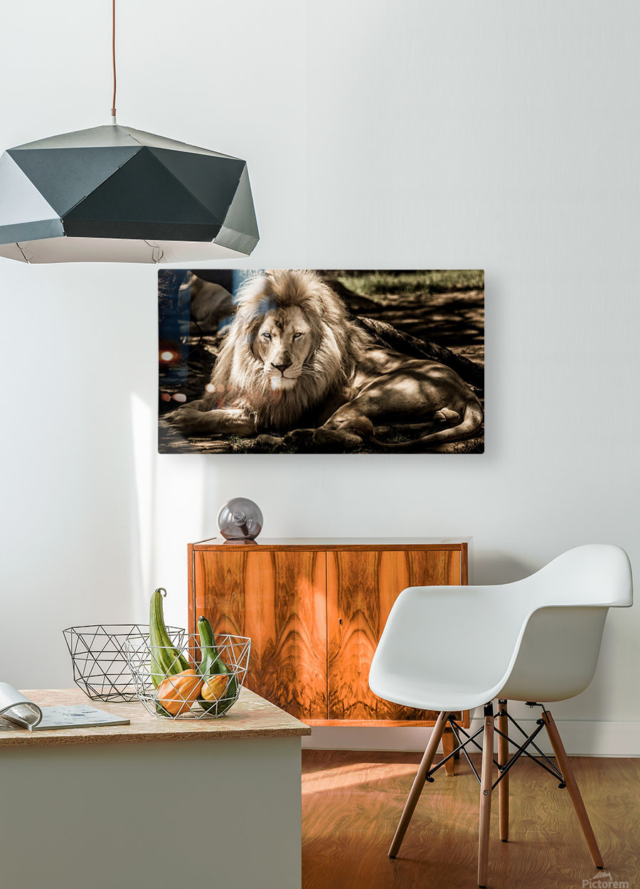 mammal lion animal portrait  HD Metal print with Floating Frame on Back