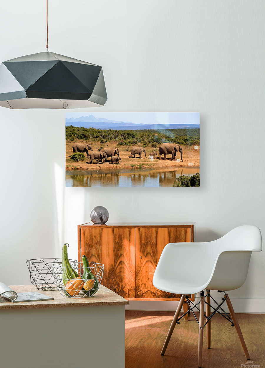 elephant herd of elephants  HD Metal print with Floating Frame on Back