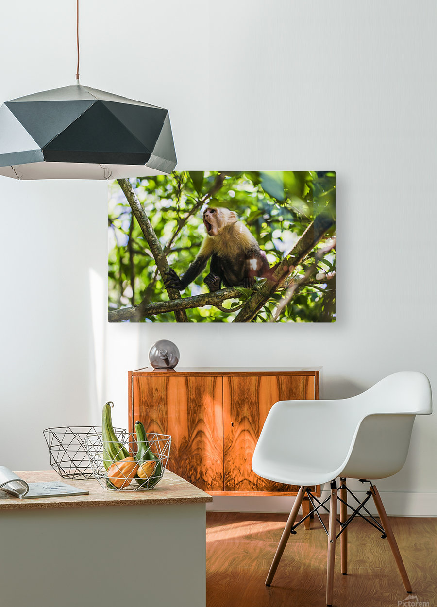 Monkey yawning in jungle  HD Metal print with Floating Frame on Back