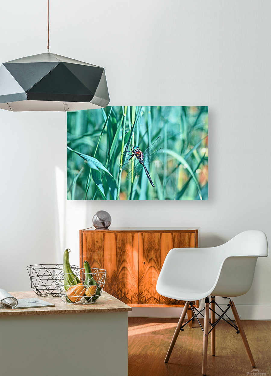 Resting  HD Metal print with Floating Frame on Back