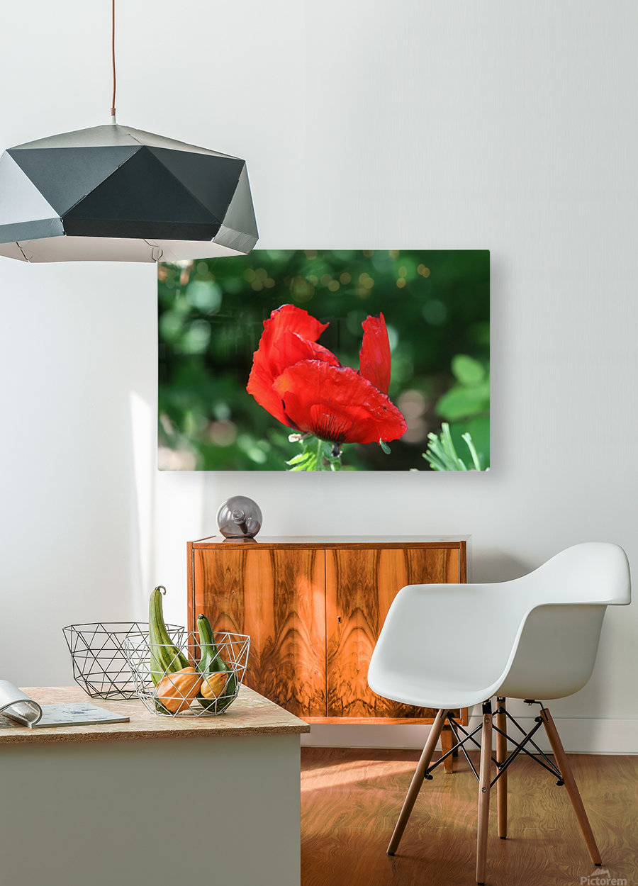 Red poppy  HD Metal print with Floating Frame on Back