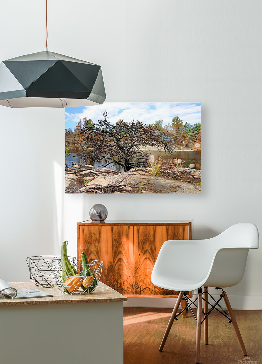 The Pine Tree I  HD Metal print with Floating Frame on Back