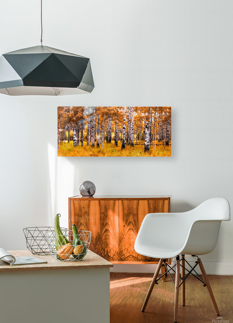 Birch Trees Autumn   HD Metal print with Floating Frame on Back