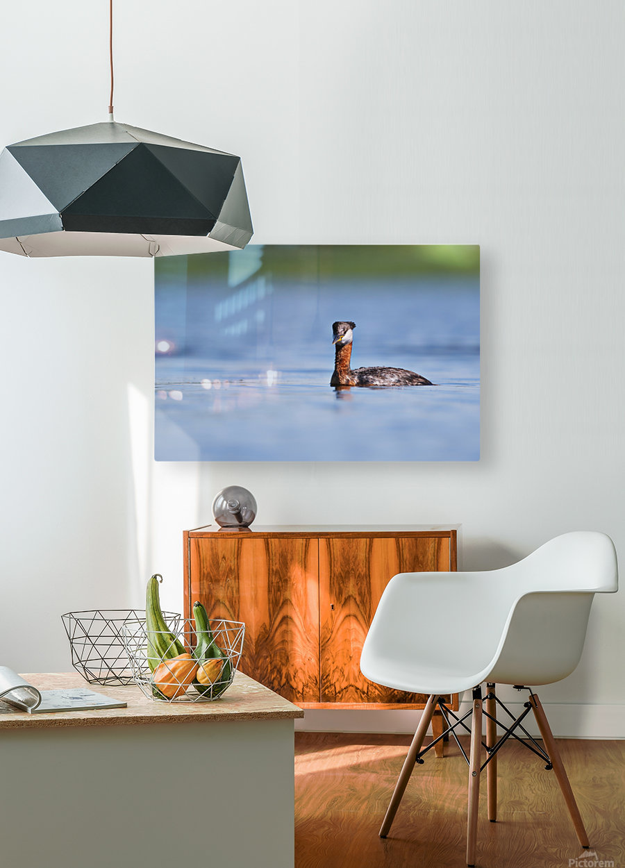 RED NECKED GREBE  HD Metal print with Floating Frame on Back