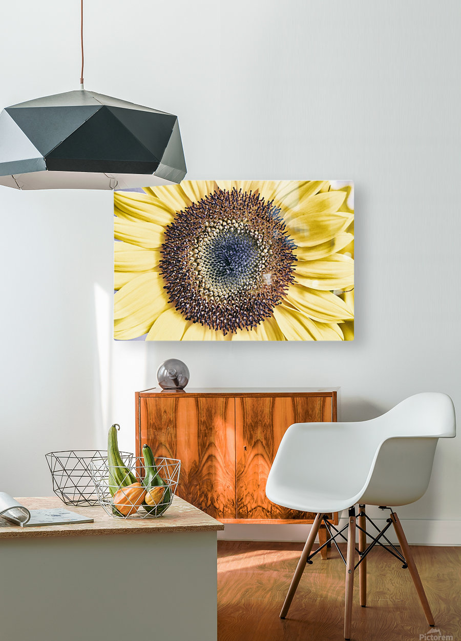 Sunflower Close Up  HD Metal print with Floating Frame on Back