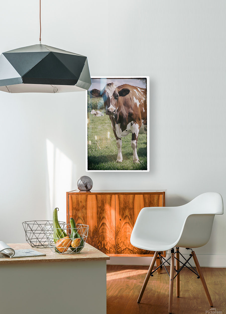 Brown Cow  HD Metal print with Floating Frame on Back
