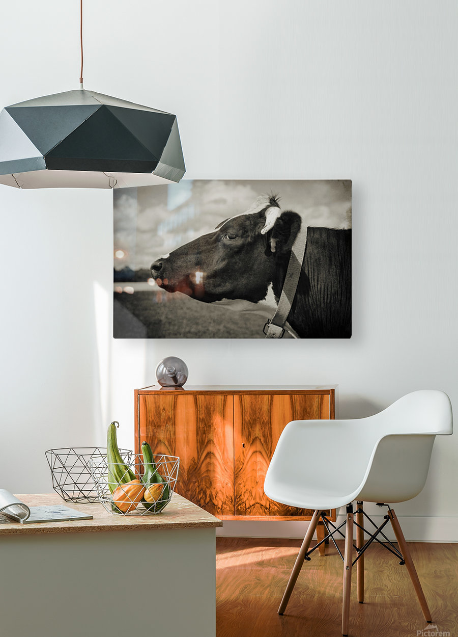 Portrait of a Cow  HD Metal print with Floating Frame on Back