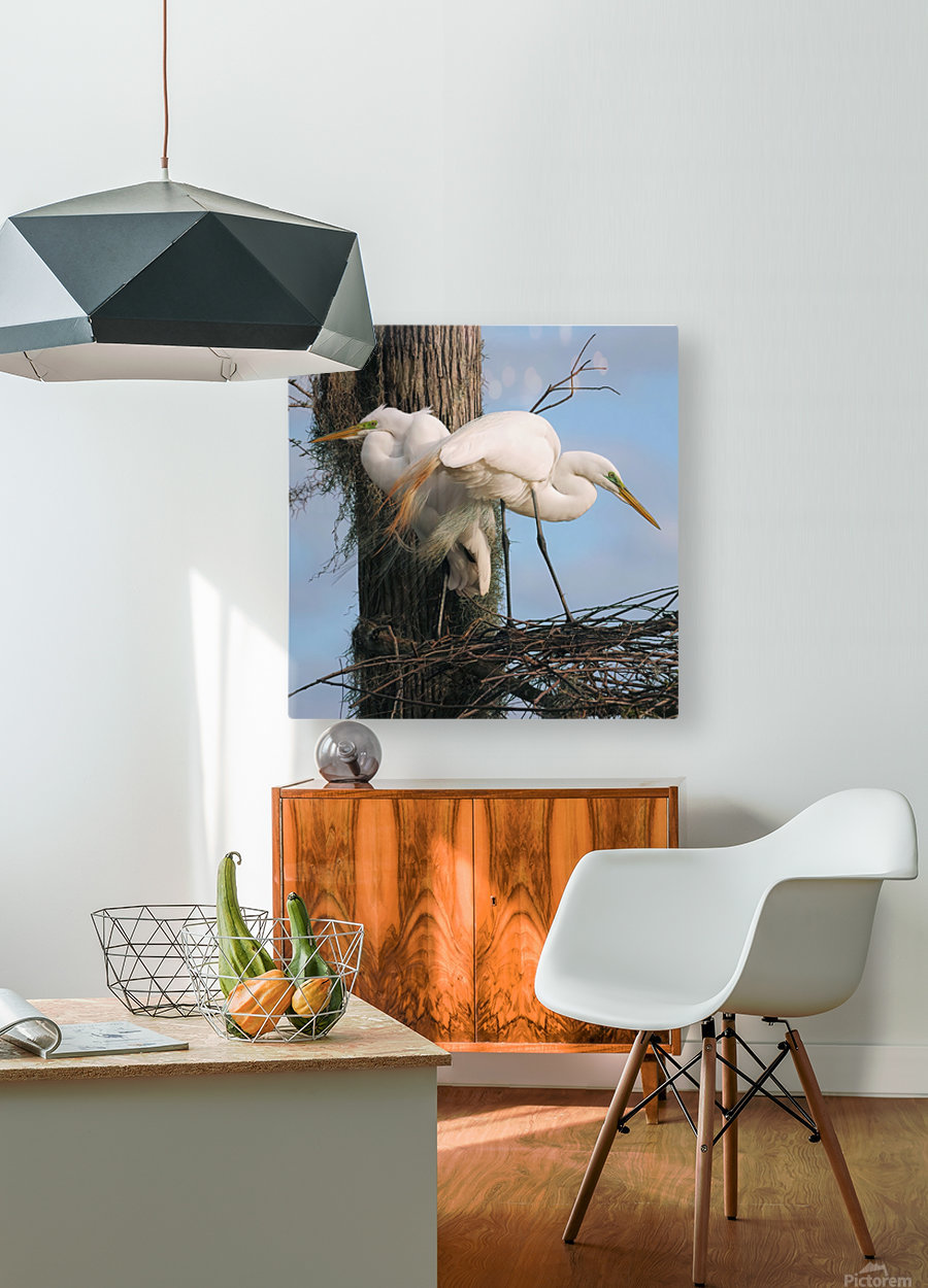 Mating Season - Great Egrets I  HD Metal print with Floating Frame on Back