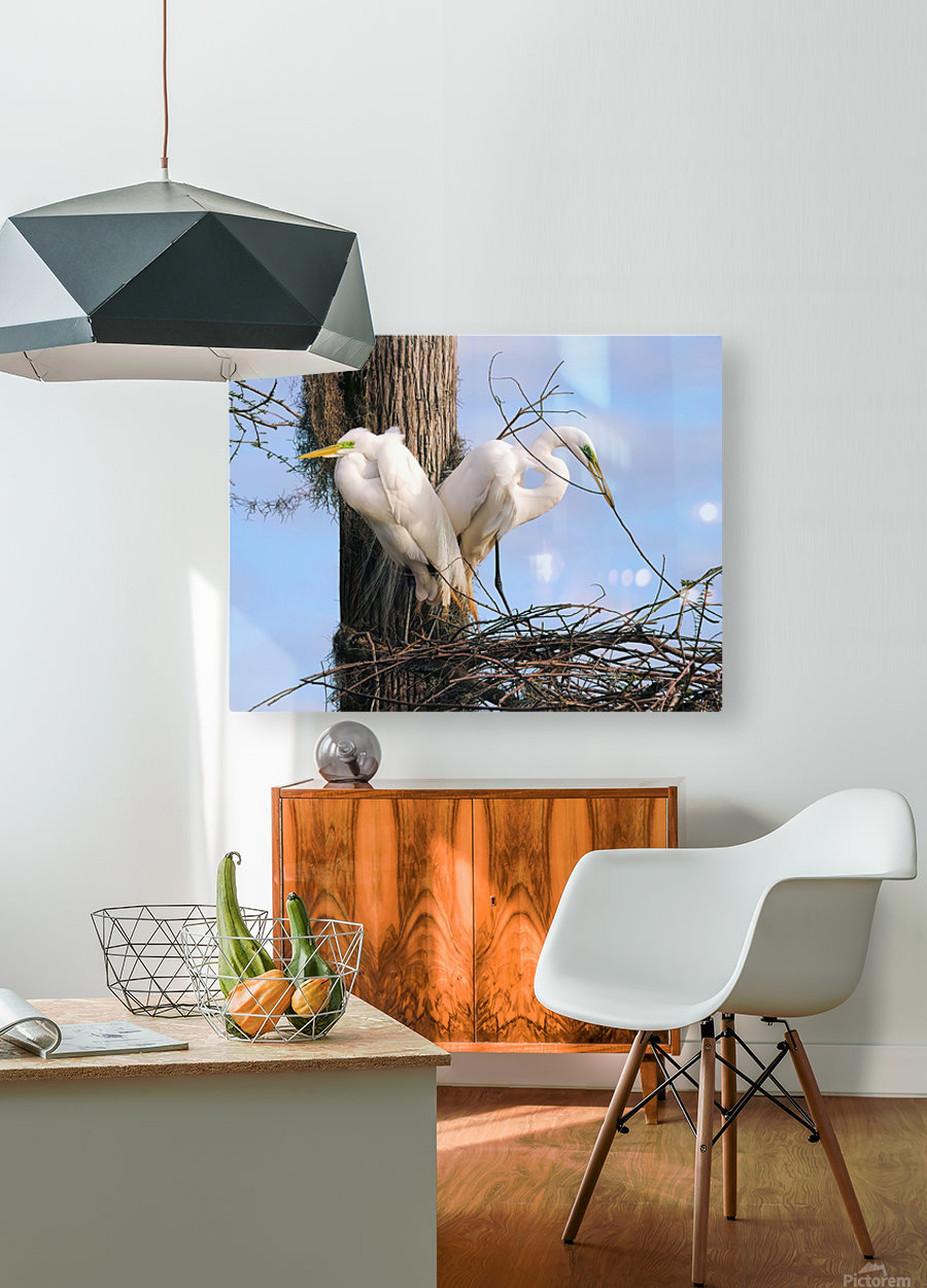 Mating Season - Great Egrets II  HD Metal print with Floating Frame on Back