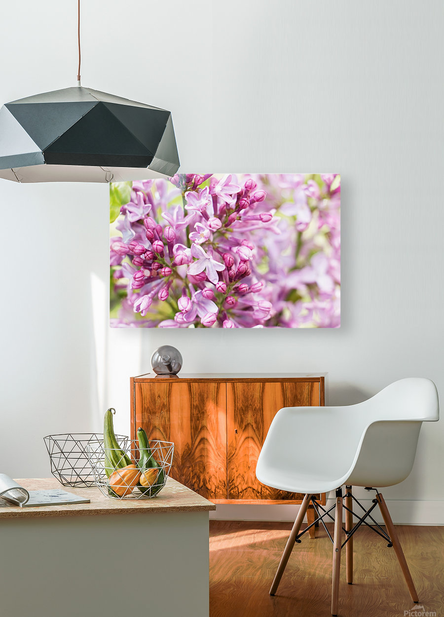 Lilacs  HD Metal print with Floating Frame on Back