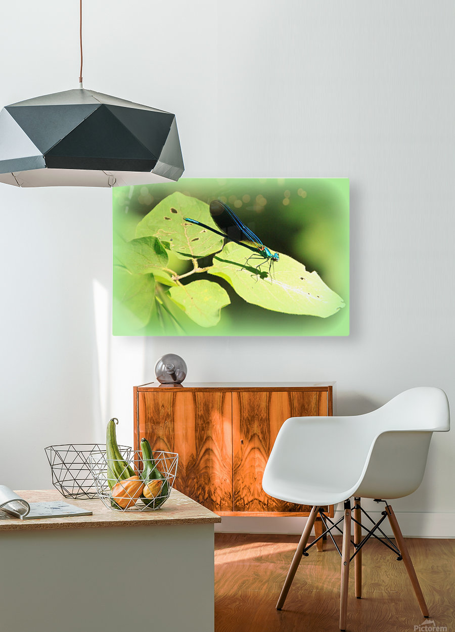 libellule  HD Metal print with Floating Frame on Back