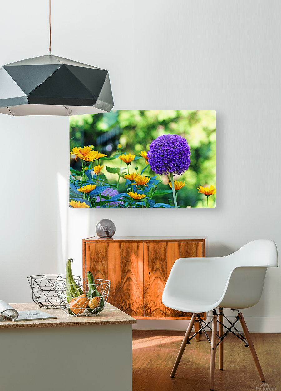 Allium And Wild Sunflowers  HD Metal print with Floating Frame on Back
