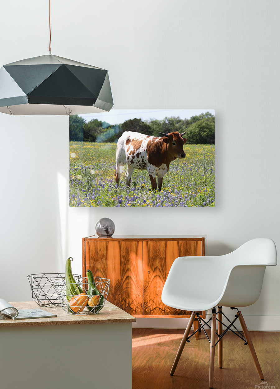 Longhorn and Bluebonnets  HD Metal print with Floating Frame on Back
