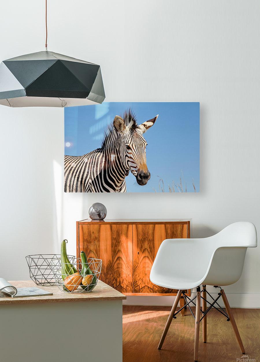 Zebra 5091  HD Metal print with Floating Frame on Back