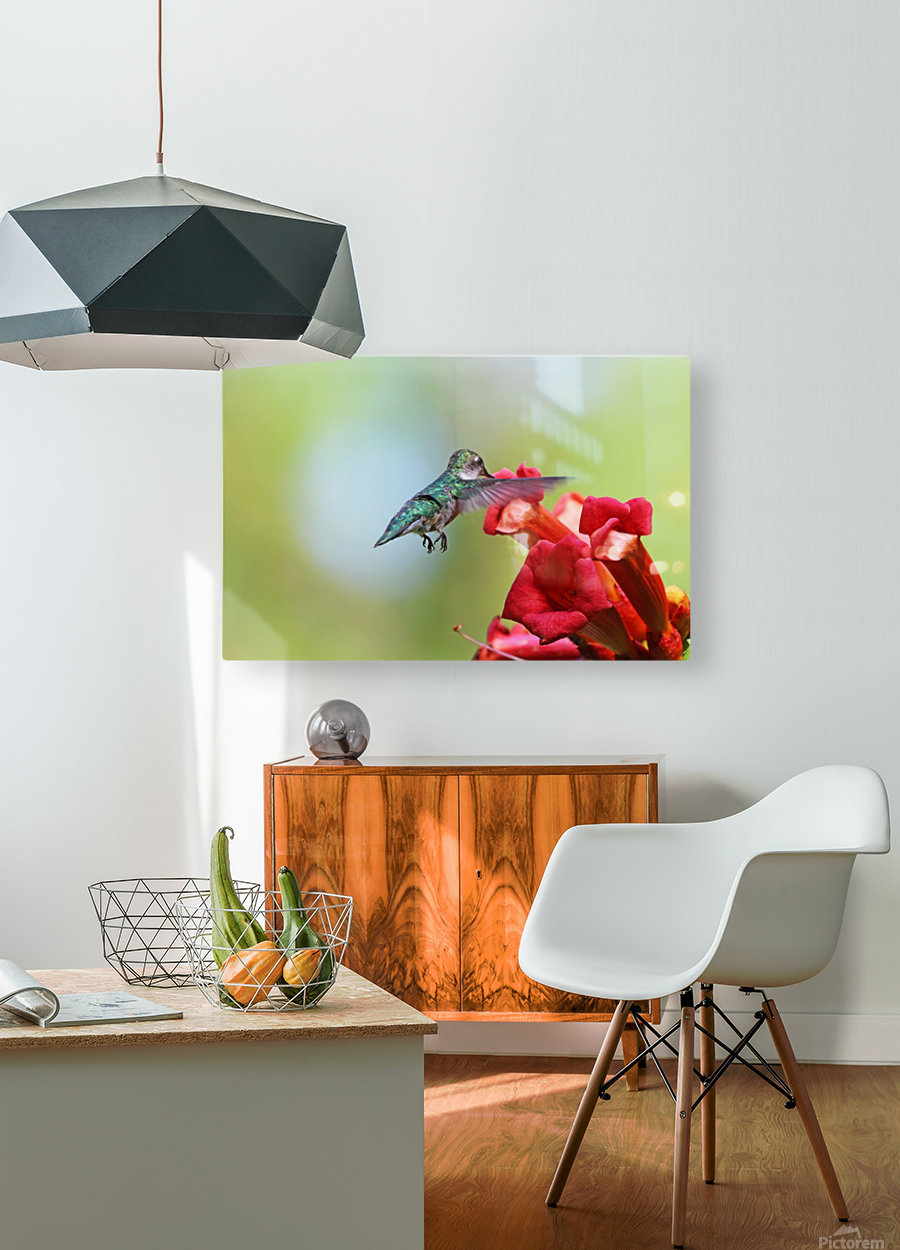 Feeding On The Trumpets  HD Metal print with Floating Frame on Back