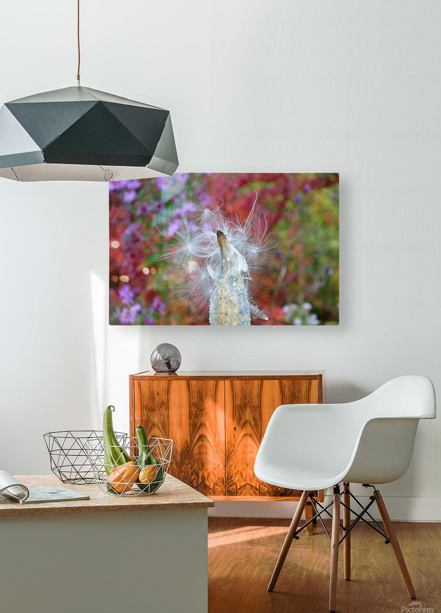 Milkweed Seeds  HD Metal print with Floating Frame on Back
