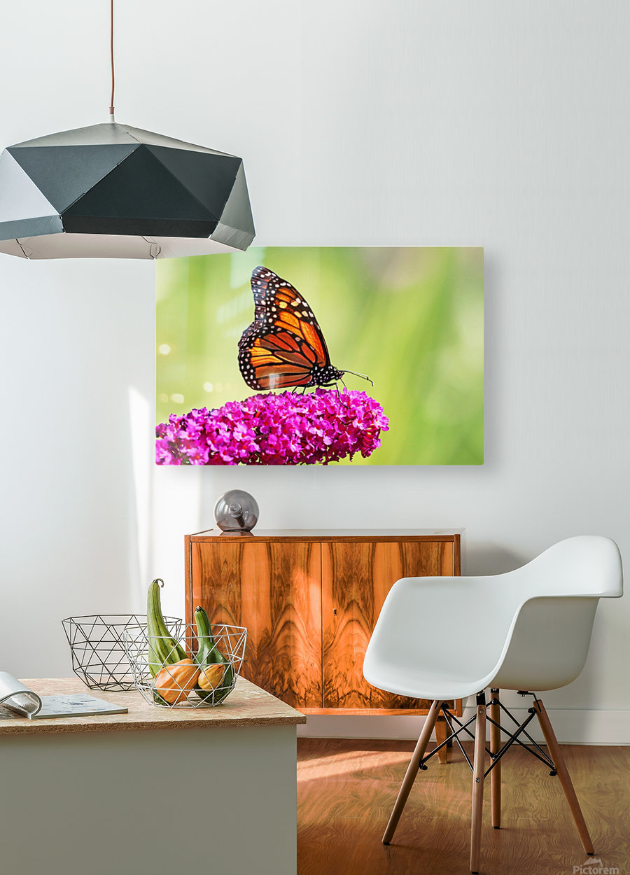 Monarch On Magenta Buddleia  HD Metal print with Floating Frame on Back