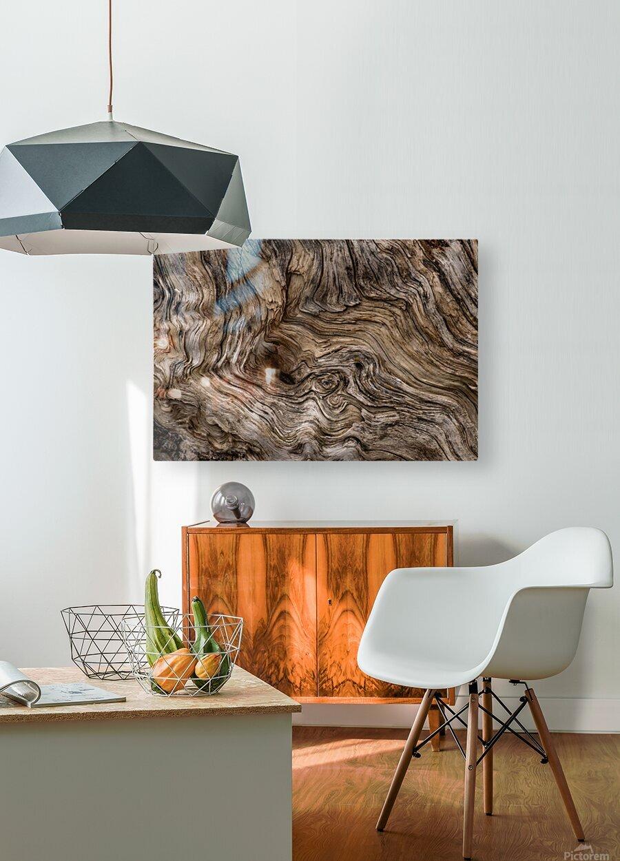 Banff Petrified Wood  HD Metal print with Floating Frame on Back