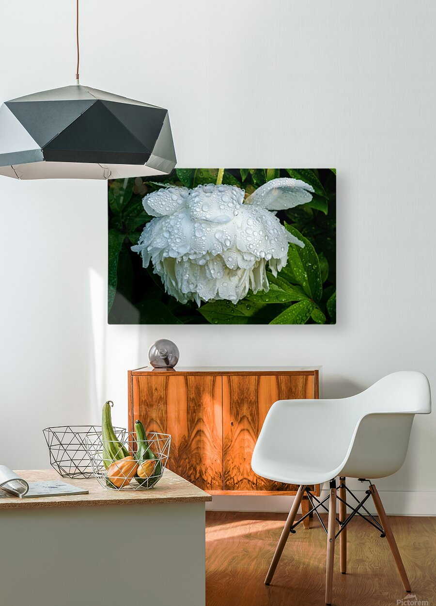 After the Rain  HD Metal print with Floating Frame on Back