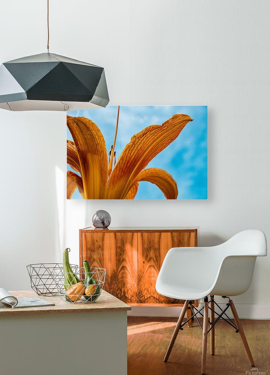 Orange Iris 3  HD Metal print with Floating Frame on Back