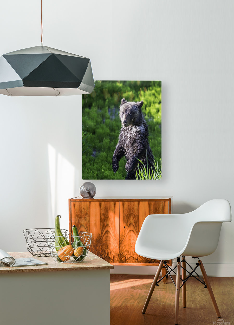 A grizzly cub named Pepper  HD Metal print with Floating Frame on Back