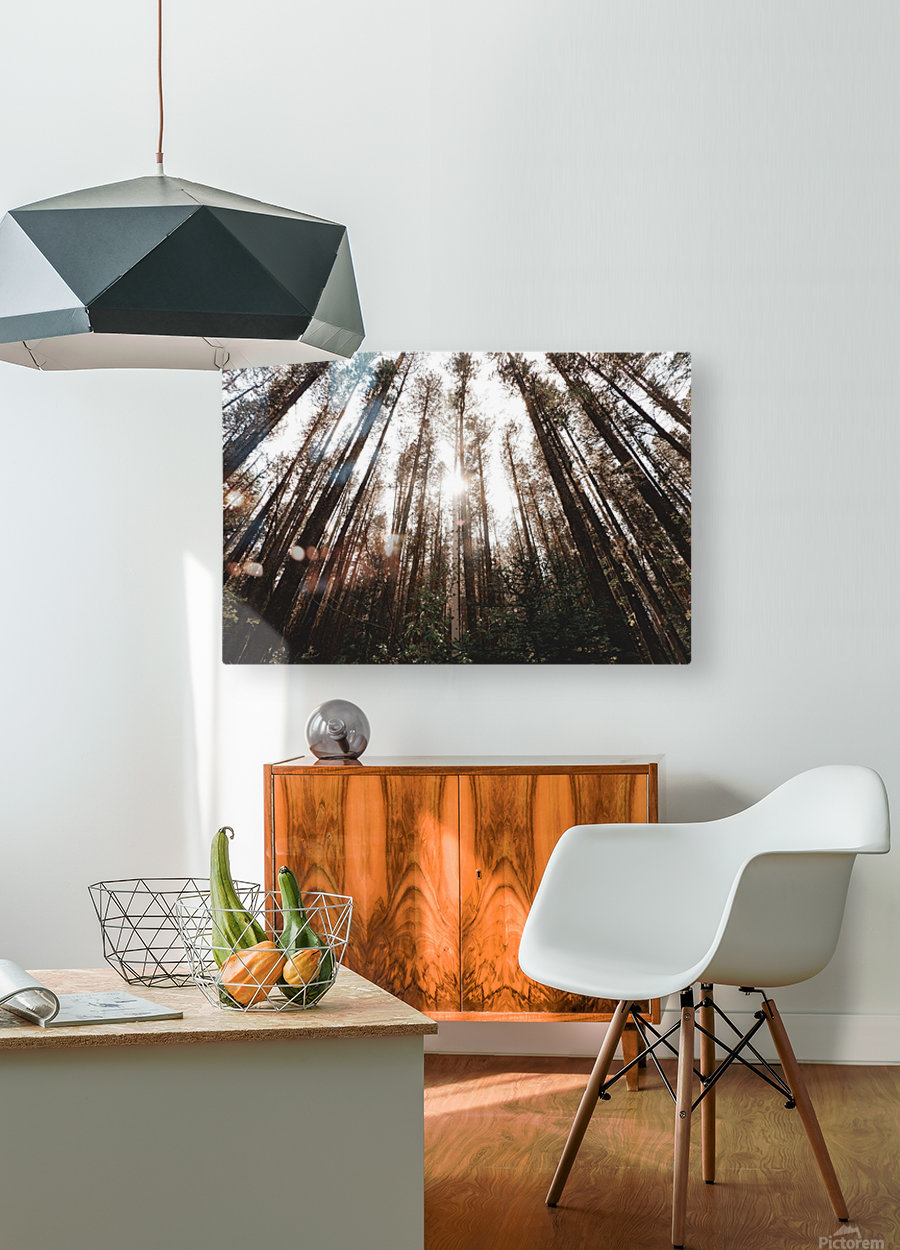See the Sun  HD Metal print with Floating Frame on Back