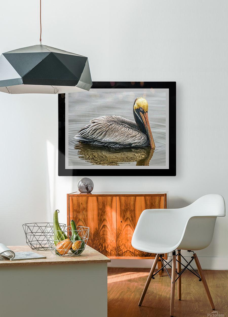 Brown Pelican II - HDR  HD Metal print with Floating Frame on Back