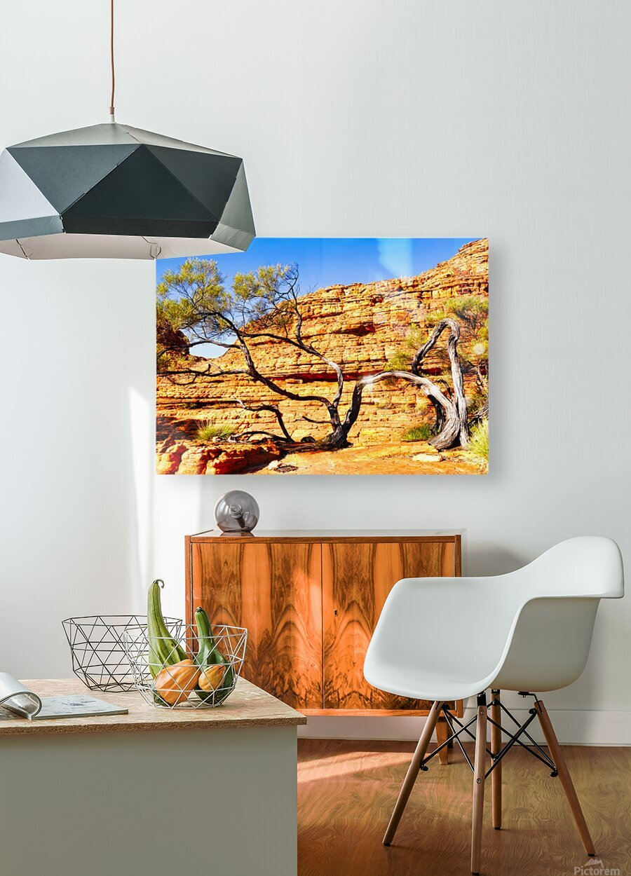Twisted Tree - Kings Canyon  HD Metal print with Floating Frame on Back