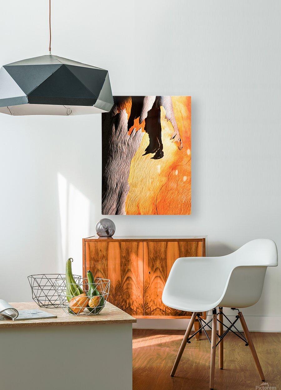 Salmon Bark Peeling  HD Metal print with Floating Frame on Back