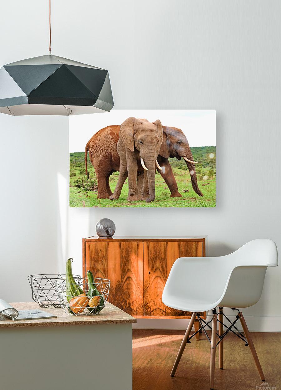 Addo Elephants 45  HD Metal print with Floating Frame on Back