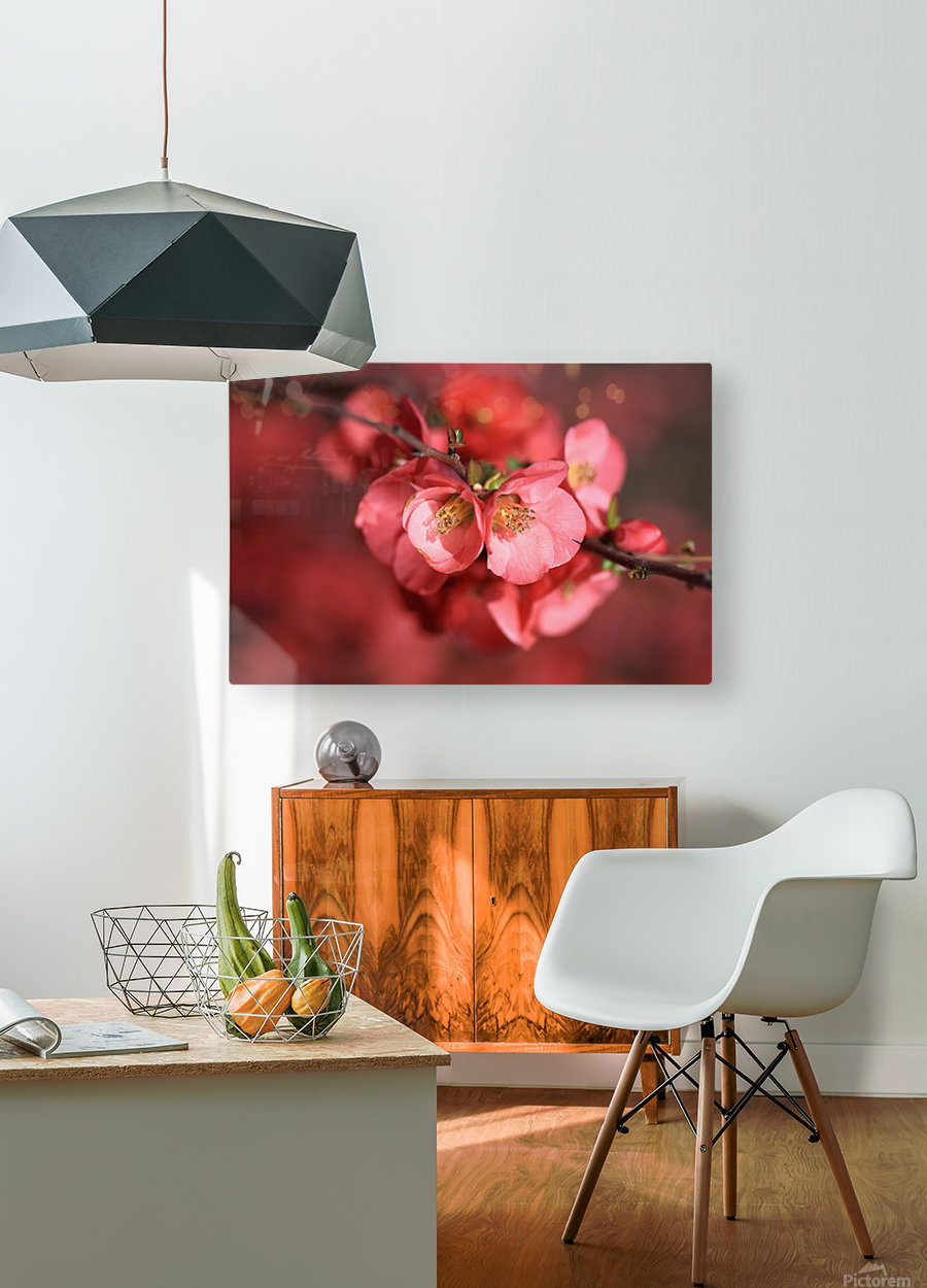 Flowering Quince Of Spring  HD Metal print with Floating Frame on Back