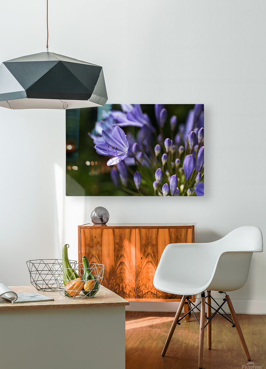 Agapanthus Blue  HD Metal print with Floating Frame on Back