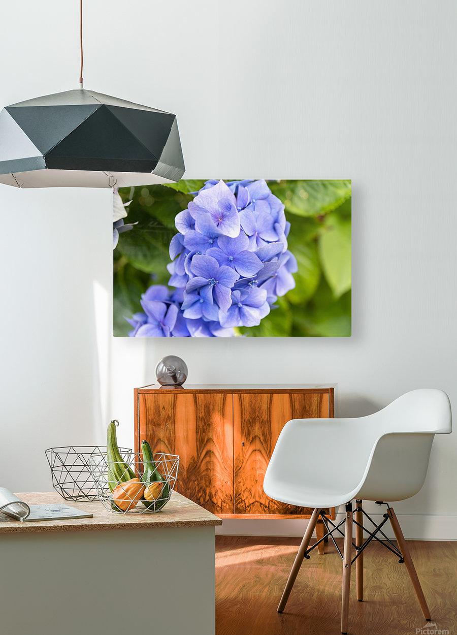 IMGP4936  HD Metal print with Floating Frame on Back
