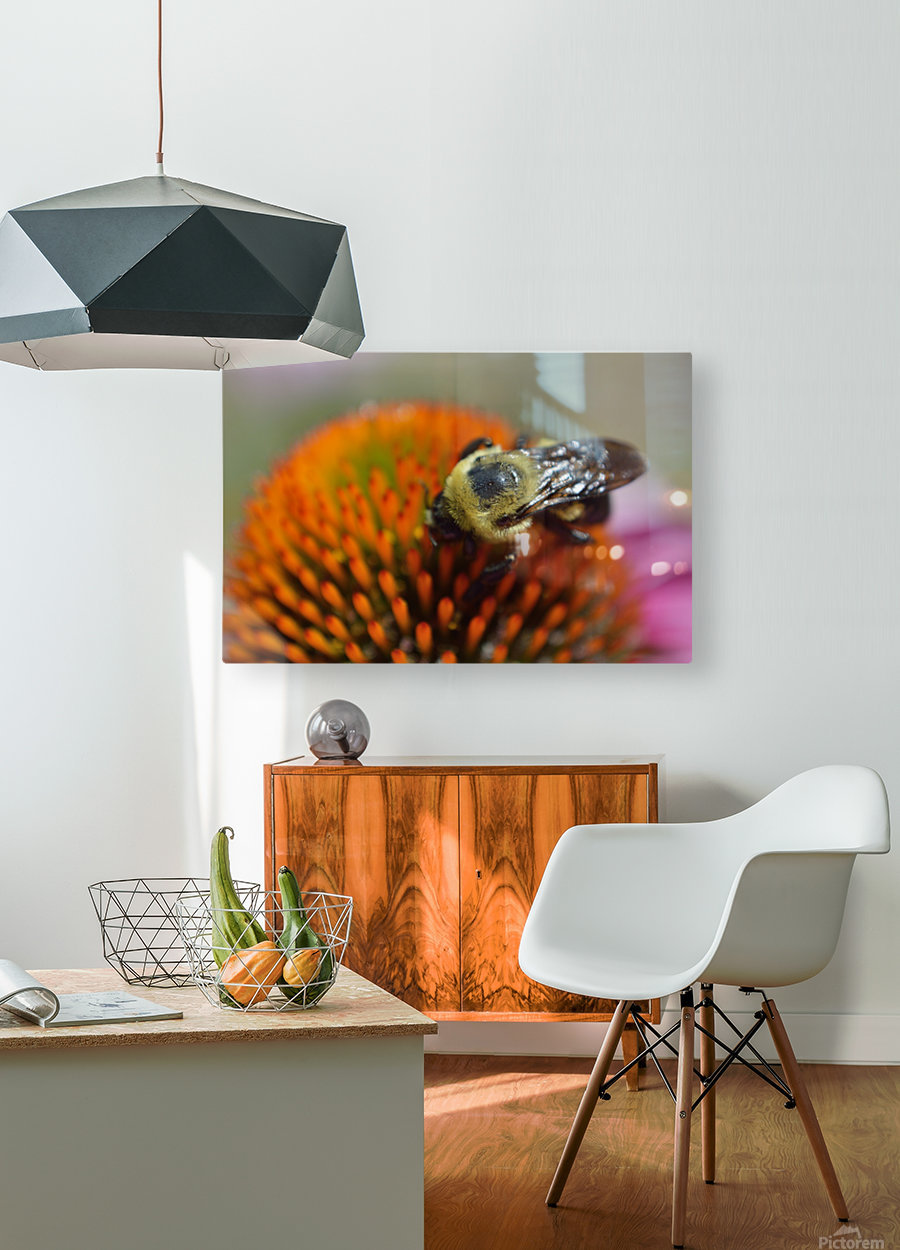 Purple Coneflower with bee  HD Metal print with Floating Frame on Back