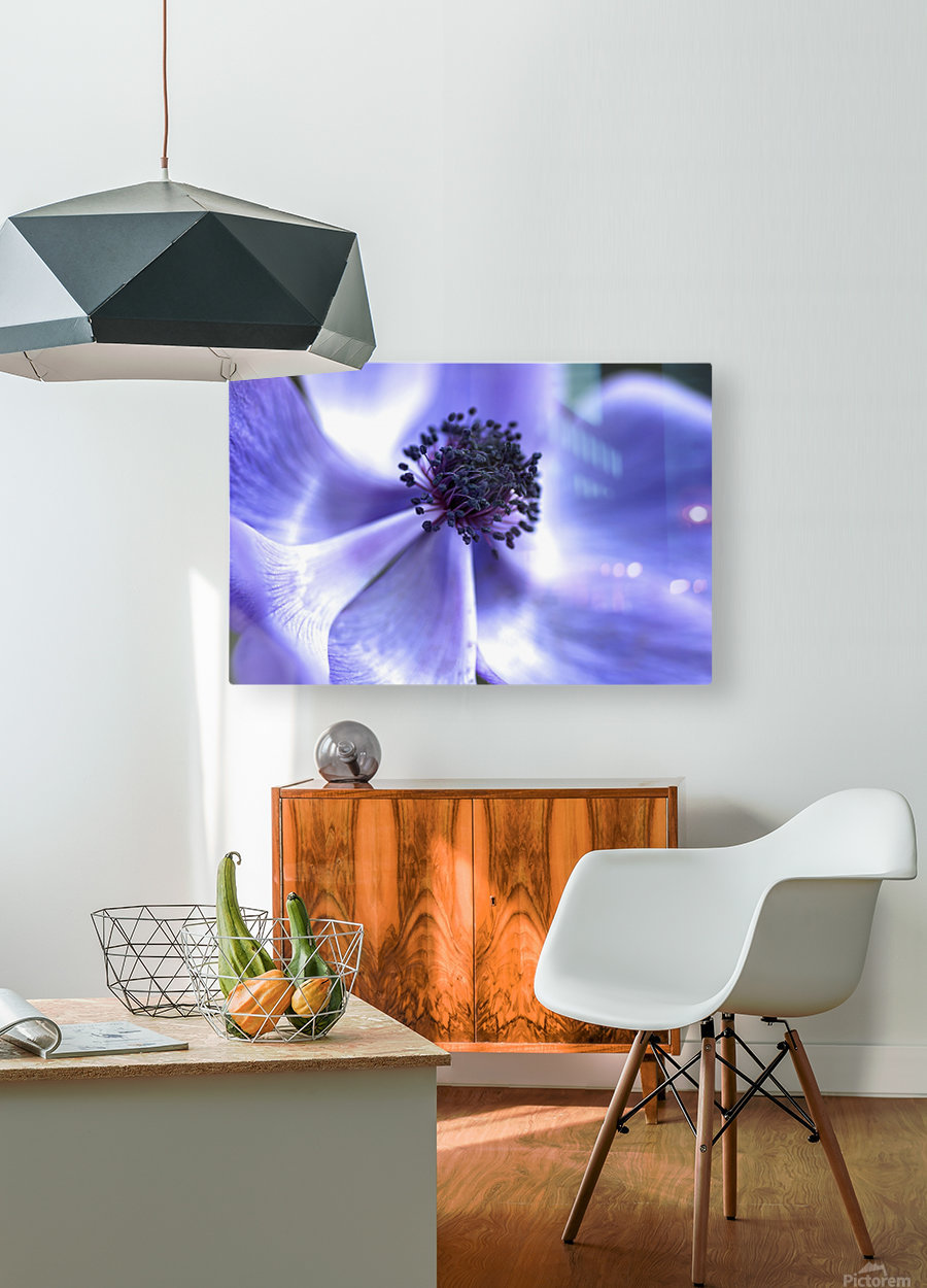 Blue Anemone  HD Metal print with Floating Frame on Back
