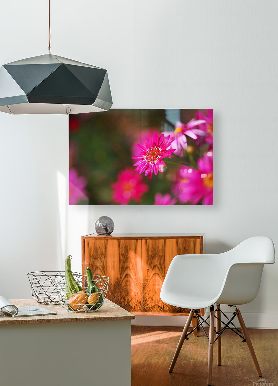 Hot Pink Small Daisy  HD Metal print with Floating Frame on Back