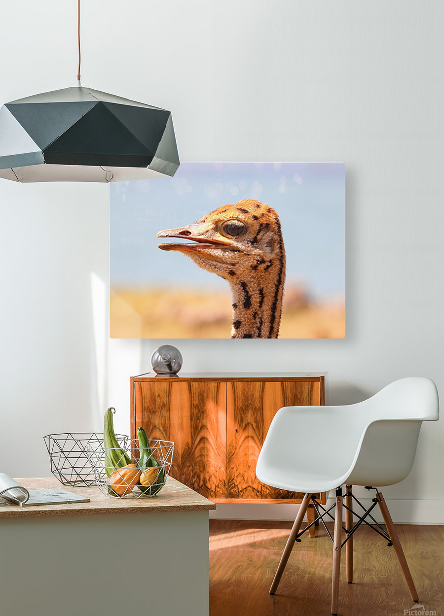 Baby Ostrich 5378  HD Metal print with Floating Frame on Back