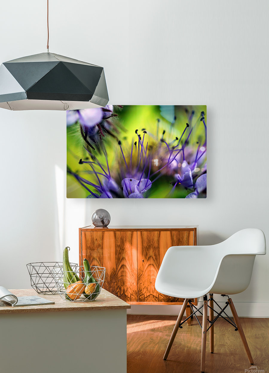 Abstract Pop Color Flower Photography 17  HD Metal print with Floating Frame on Back
