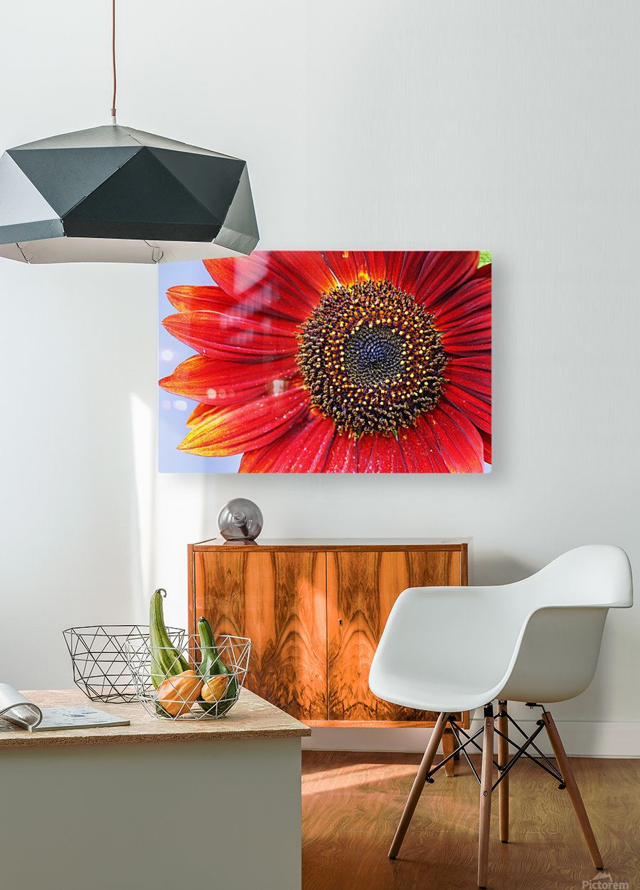 Ruby Red Sunflower  HD Metal print with Floating Frame on Back