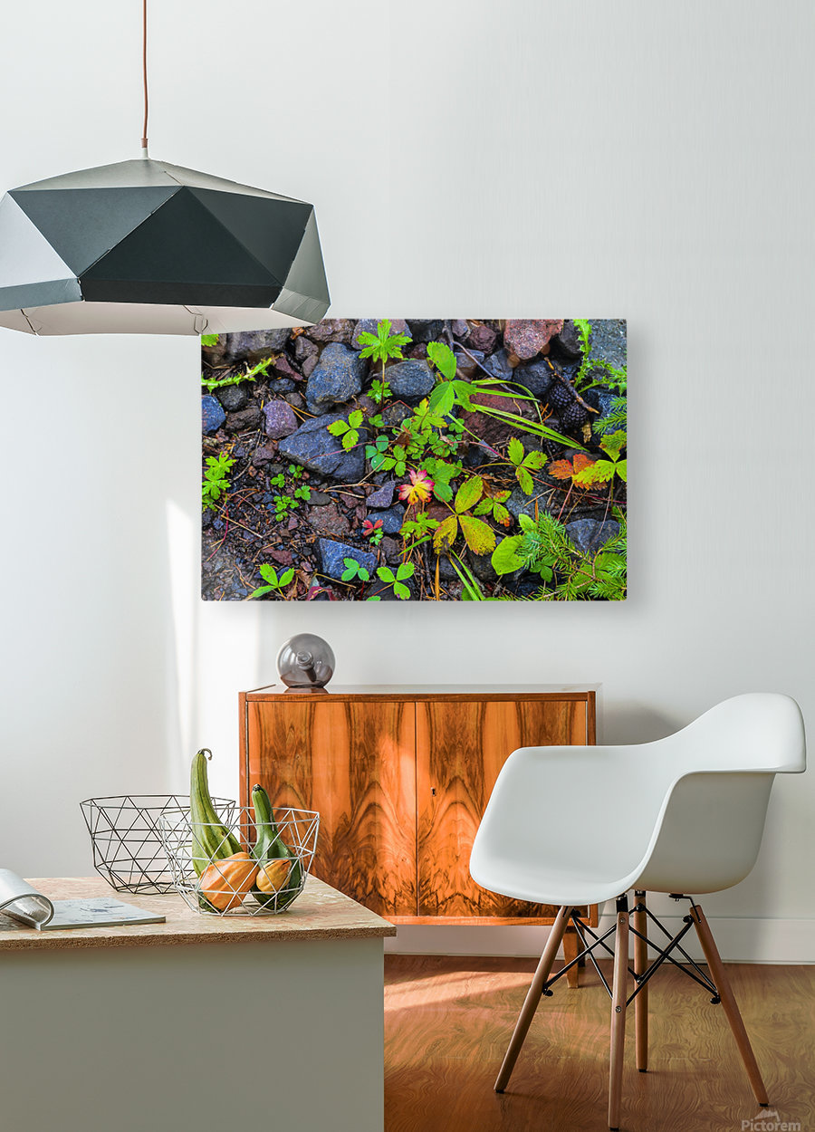 Forest floor  HD Metal print with Floating Frame on Back