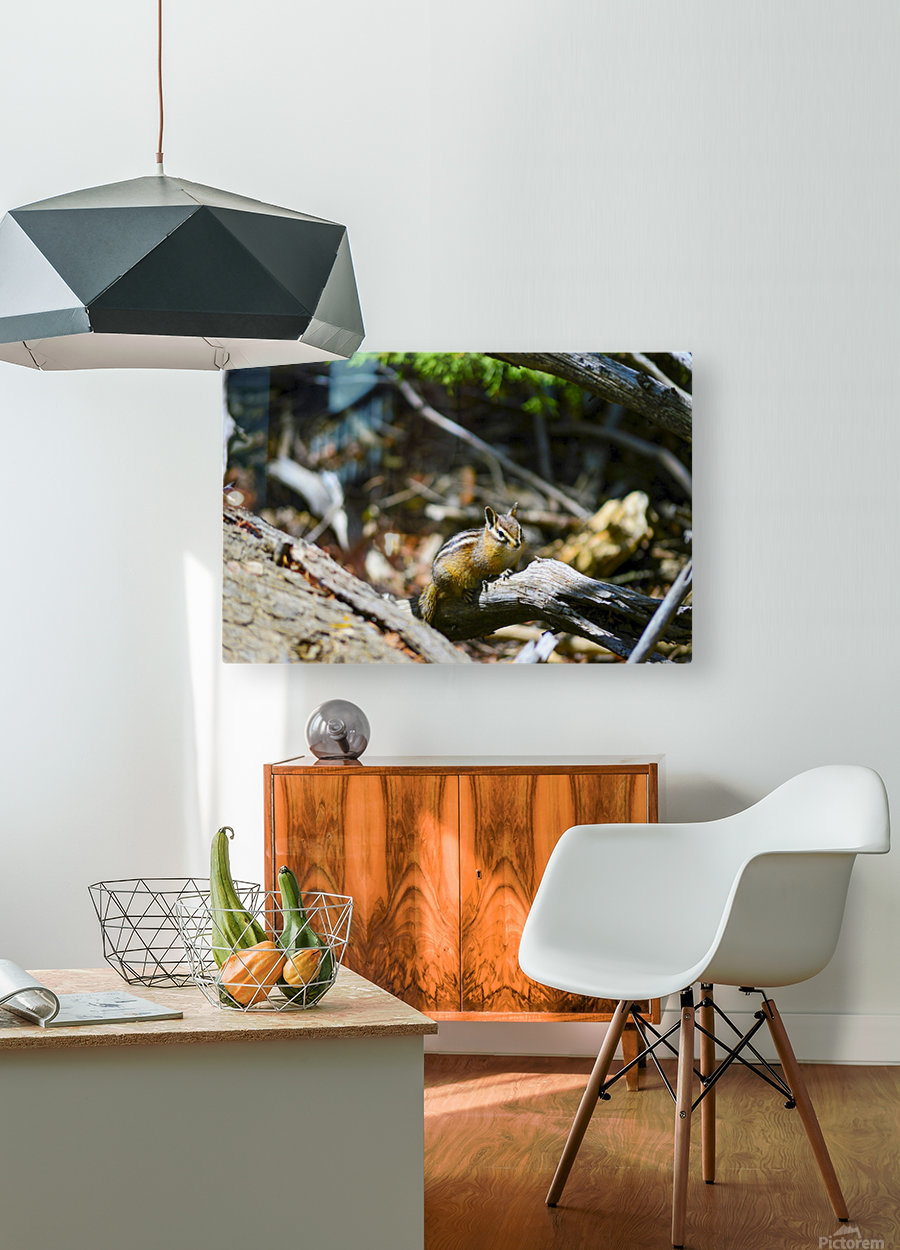 Chipmunk  HD Metal print with Floating Frame on Back