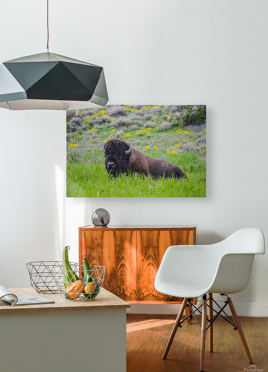 Bison in Wildflowers  HD Metal print with Floating Frame on Back