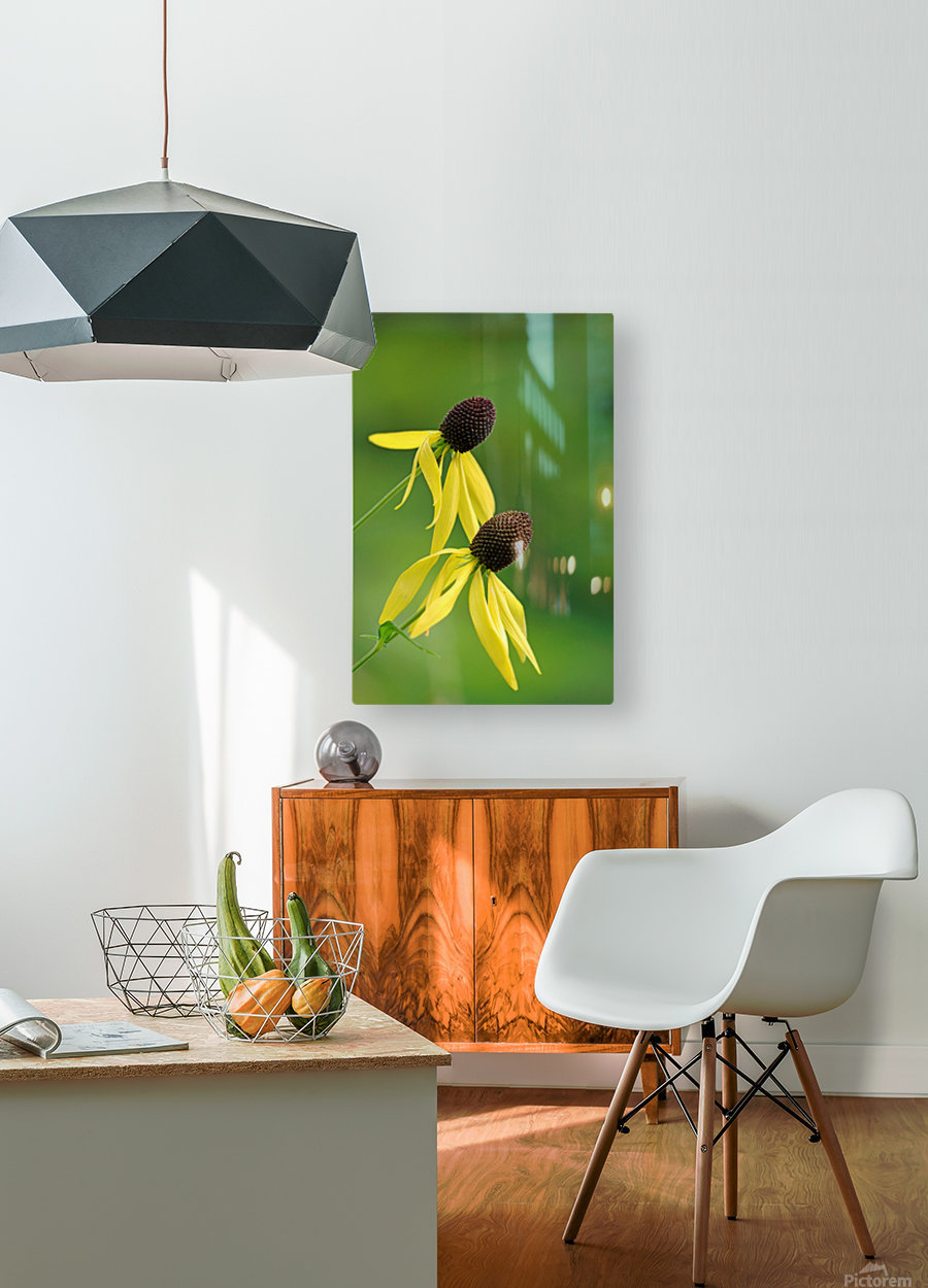 Great Coneflower  HD Metal print with Floating Frame on Back
