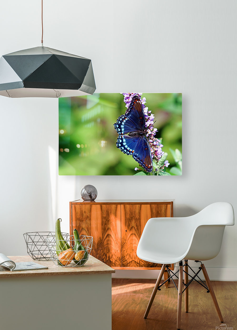 Red Spotted Purple Beauty  HD Metal print with Floating Frame on Back