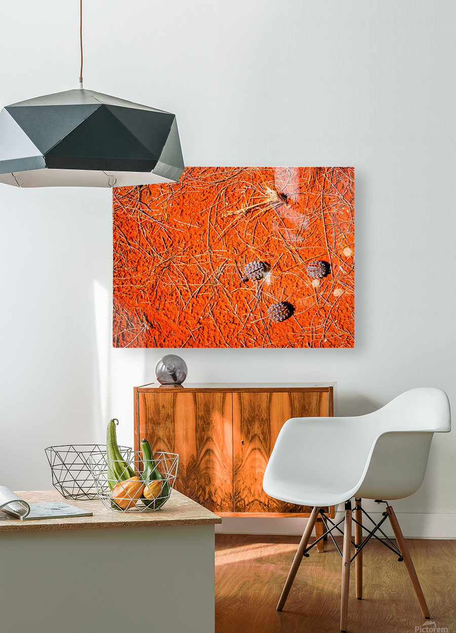 Seeds of the Desert  HD Metal print with Floating Frame on Back