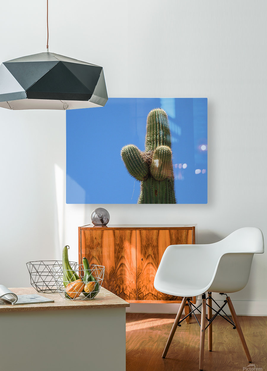 Saguaro Cactus Cradling A Birds Nest Photography  HD Metal print with Floating Frame on Back