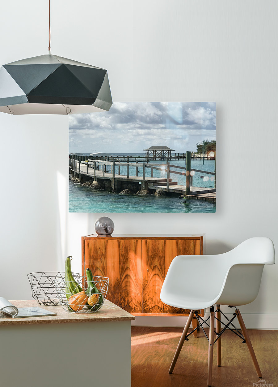 Dolphin Cove  HD Metal print with Floating Frame on Back