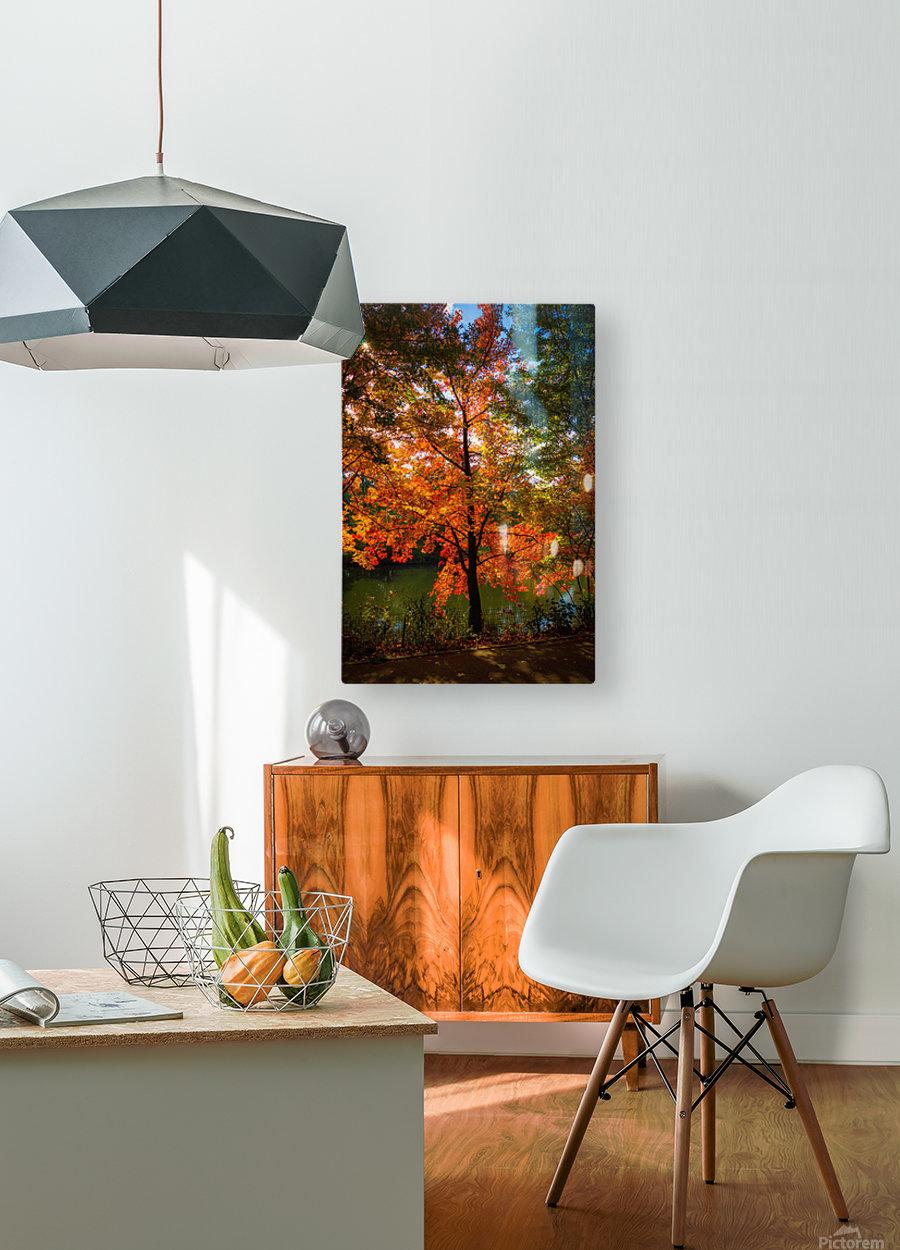 A fall colors tree  Impression métal HD avec cadre flottant sur le dos